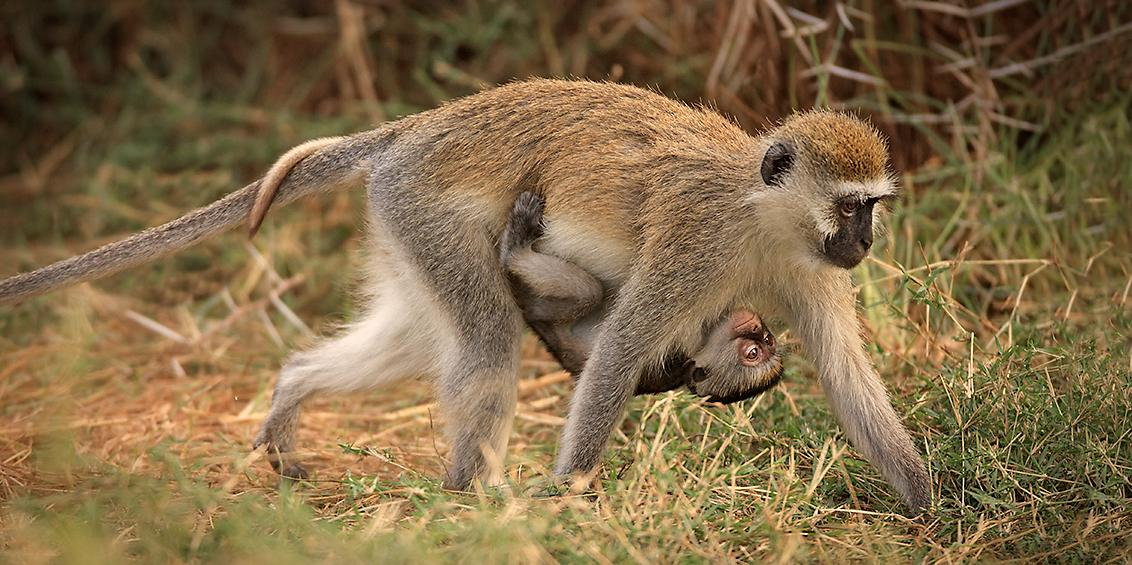 Tours 5 - Baboon & Baby