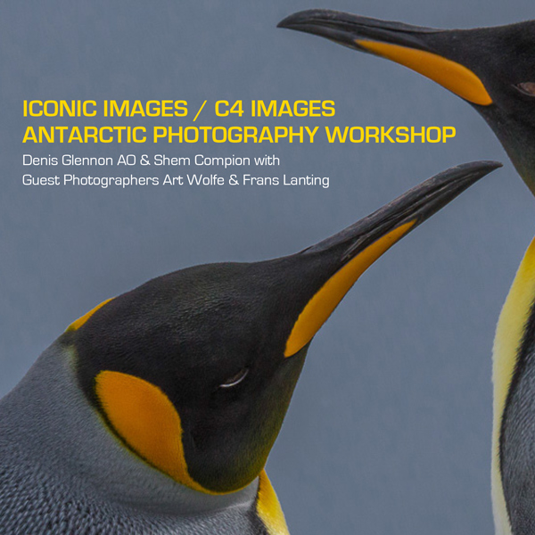 Iconic Images / C4 Images Antarctica Photography Workshop 2014 Complimentary e-Book