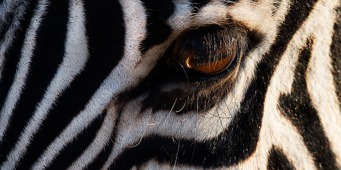 About 3 - Zebra Eye sRGB