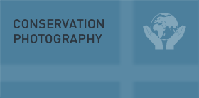 Conservation Photography