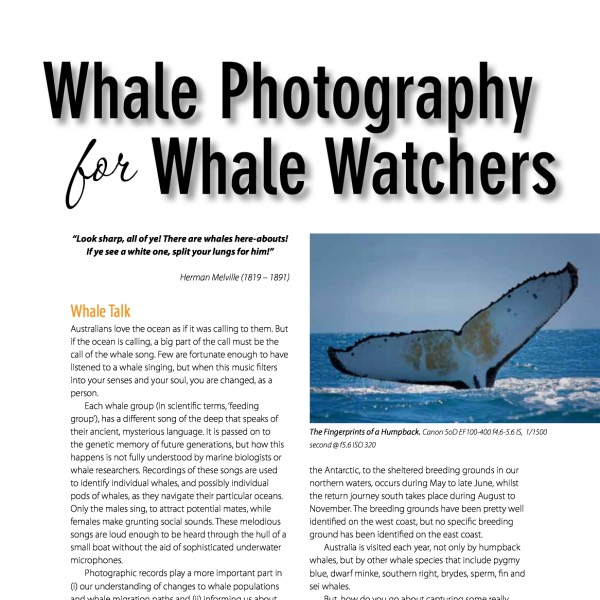 Whale Photography for Whale Watchers