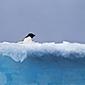 Antarctic 2016 FI #2
