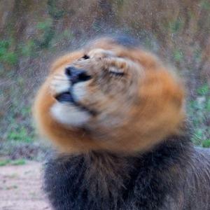 African Hair Drying