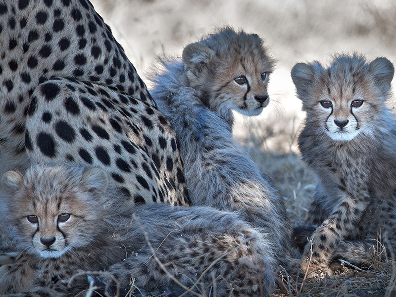 Itineraries - Premier Photographic Safaris & Tours